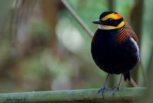 birds / by Natalie Williams