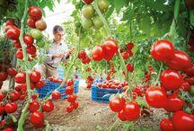 Horticultura y cultivos
