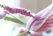 Kollektion Frühjahr/Sommer 2015 / Hier finden Sie ein paar Impressionen der Vosteen-Kollektionen für Frühjahr/Sommer 2015. Nähere Infos unter www.vosteen.de