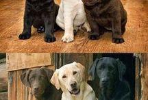 Animales queridos