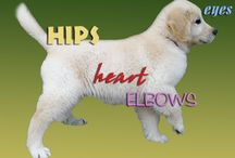 Puppy and Dog Health / A healthy canine is a happy canine!