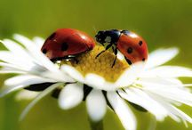 Animal Spiritual Source Universe