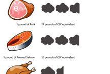 cows farts