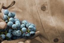 Vineyards / Wineries / by La Casa de Antociano
