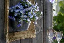 El color del mar y el cielo / Flores y plantas en la gama del azul / by Andrómeda Floristería Creativa