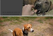 Rescued Animals