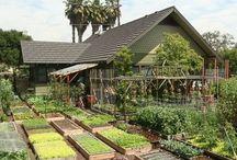 สวนผัก