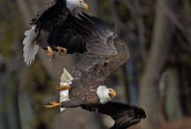 Fish and Wildlife / by Izaak Walton League of America