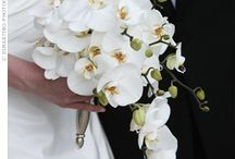 Bridal Bouquets / by Plush Catering