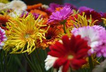 Trend-Blumen 2017 - Floristik im Interieur