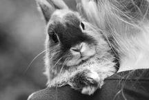 Rabbit / Rabbit