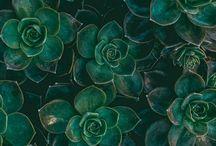 plant | flower