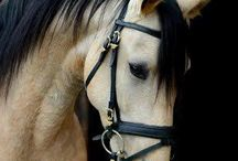 Horses... / Life is too short..do what makes u happy.