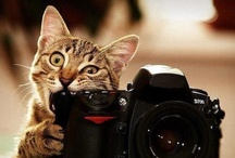 Cats with Cameras / We love cats. We love cameras. So we decided to create a board with our two favourite things together