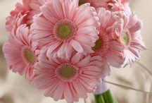 Wedding Bouquets / by Kraze Florist
