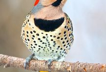 Hello Birdy