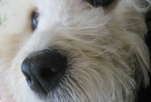 Pets of the Week! / Our famous pantheon of favored pets