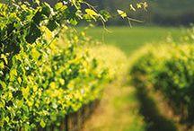 La Route des Vins / Voyage sur la Route des Vins en Afrique du Sud