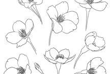 Linie kwiaty