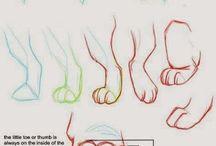 Anatomia animales