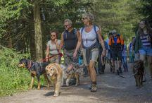 Mittwoch - unser Hundewandertag / Die Hotelchefin Elisabeth mit ihren zwei Hunden Baffa und Punky erwandert jeden Mittwoch mit ihren zwei- und vierbeinigen Gästen die Südtiroler Bergwelt! Hier ein paar Eindrücke aus unserem Wanderjahr 2014!