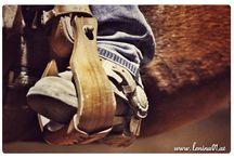 Pferde Blog Board / Eine Sammlung an Blogartikeln zum Thema Pferde, wichtige Infos und Ratschläge.
