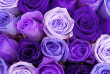 Purple Pleasures / Purple is the colour of passion / by Maija Green-Mayne
