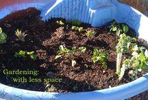 Gardening: container gardening