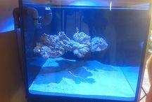 Floating Reefs Aquascape