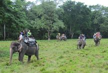 Jungle Safari Tours / Jungle Safari Tours is the best opportunity to encounter and understand the amazing wild lives with the wild environment.  http://www.trekkingmart.com/destination/nepal/jungle-safari-tours