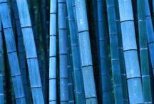 Bambu / by 365 Days Till Valentine's