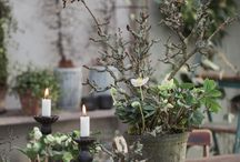 Bloem/plantdecoratie