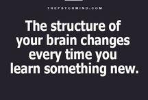 Εγκέφαλος.