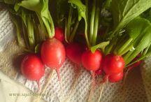 Saját termés a kertből / Konyhakertemből