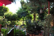 Mati Greece / Paradise
