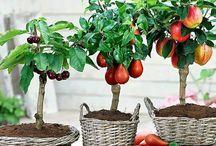 Frutas & Vegetais_caseiros