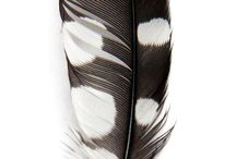 Draw & Paint: Feathers