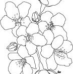 Templates, coloring pages, printables / by ToothF