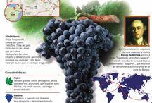 Vinos, Wines