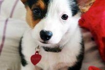 The dog foto