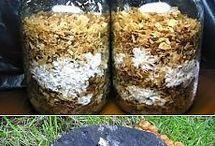 выращиваем грибы дома