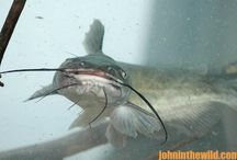 HOW TO DOUBLE YOUR PLEASURE AND YOUR FUN JUG FISHING FOR CATFISH