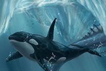 35. MARINE LIFE - ORCA'S