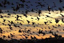 ~flight for life~