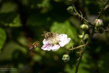 Bienen und Imkertätigkeiten / Bienen und Imkertätigkeiten