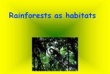 Rainforests / by Brenna Fairchild