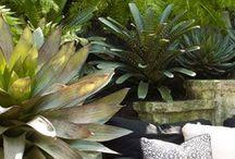 Gardening - Tropical