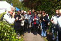 Medicinal teas and tincture walk