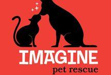 About Imagine Pet Rescue
