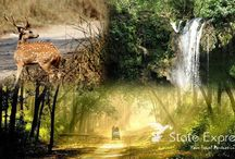 Wild ife Tours in IndiaL